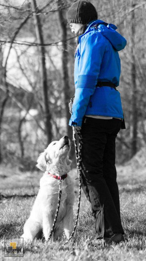 Bild-Retusche - Hundeschule Sinsheim